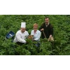 Growing for Restaurants - Salad for all Seasons - Sunday March 20th 2015 - with Dermot Carey